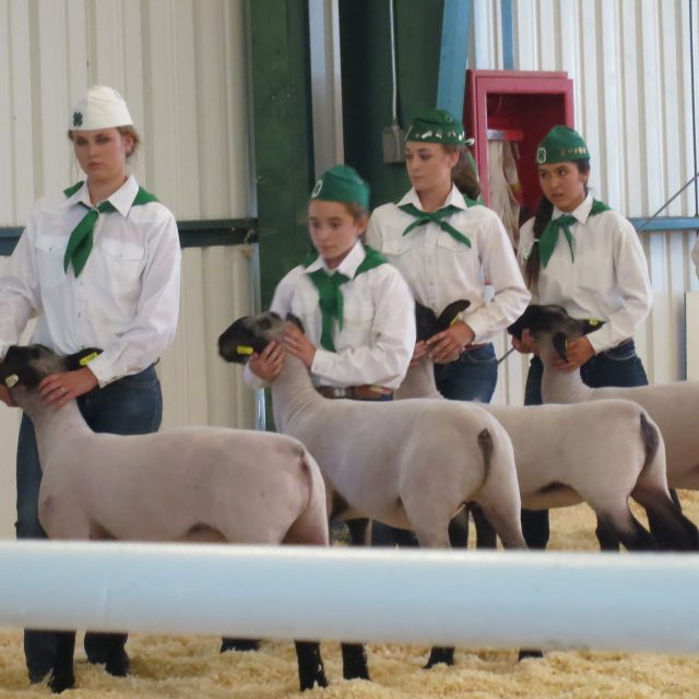 National Agricultural Youth Show